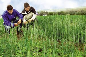 Estudantes de Agronomia - UNITAU