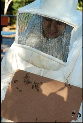 A aluna Lisa Alvareli realizará estudos de pólen financiados pela Secretaria da Agricultura da Bahia